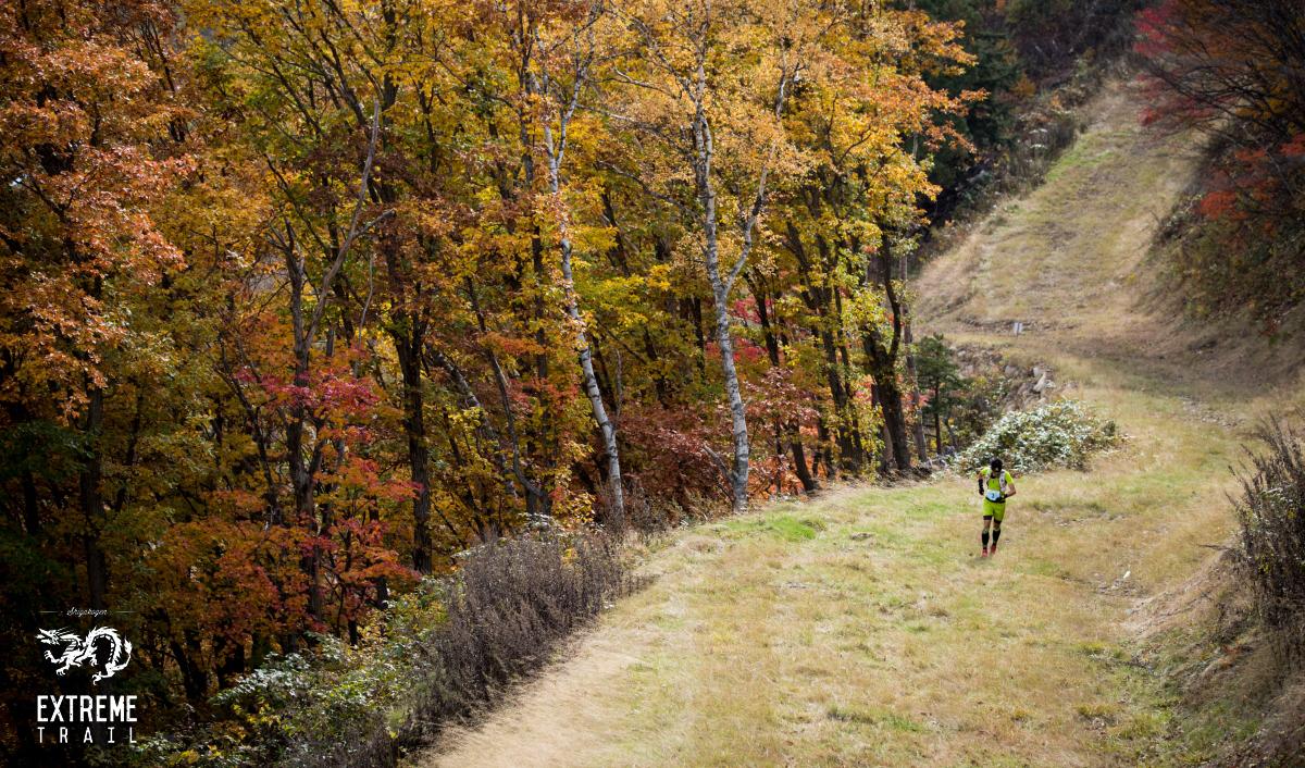 秋の紅葉が実に美しい山岳レースである ©SHIGAKOGEN EXTREME TRAIL
