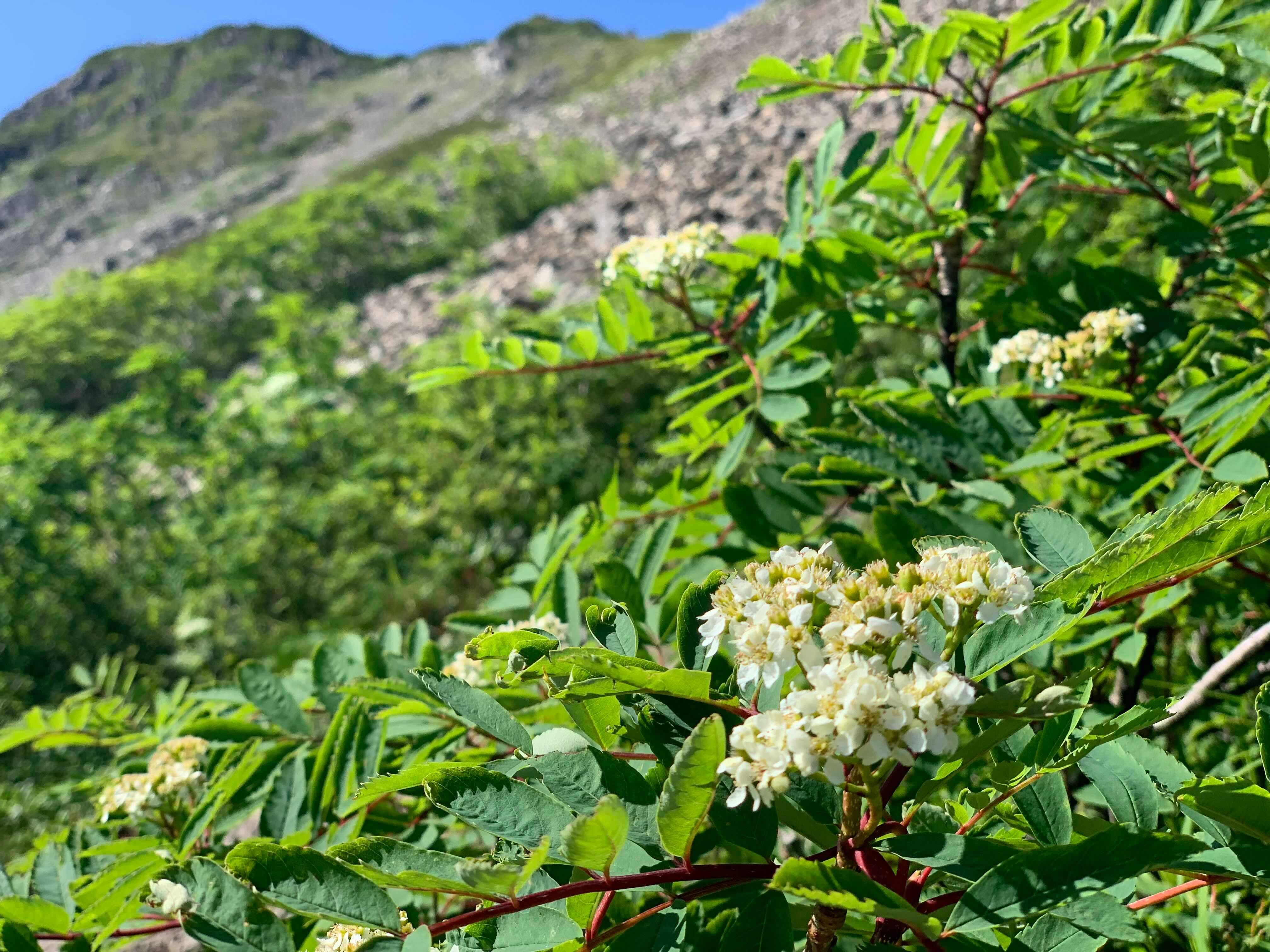 夏山の楽しみの一つ、花々も出迎えてくれる。