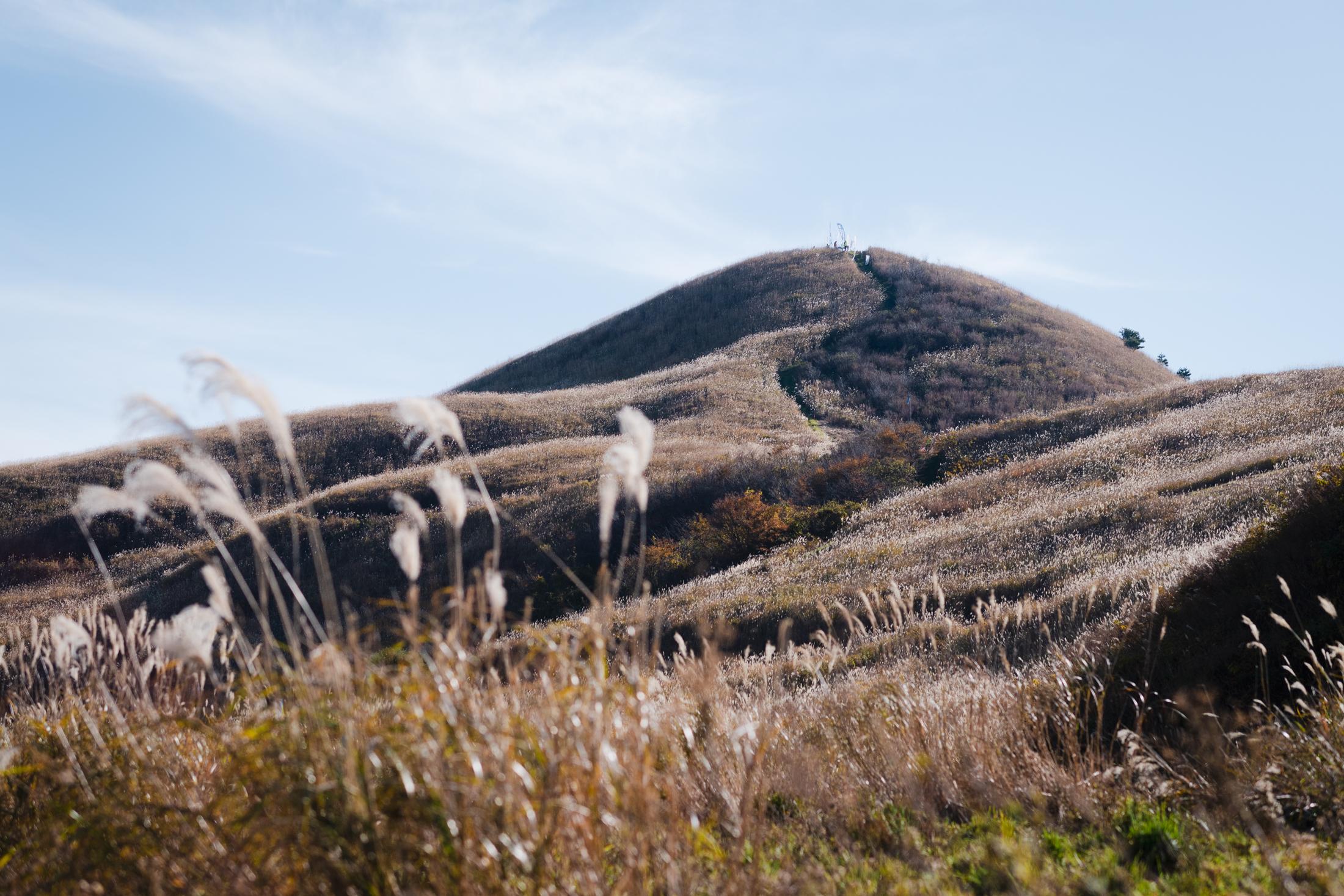 ススキに覆われた塩塚峰山頂付近 ©えひめさんさん物語/四国中央スカイラン